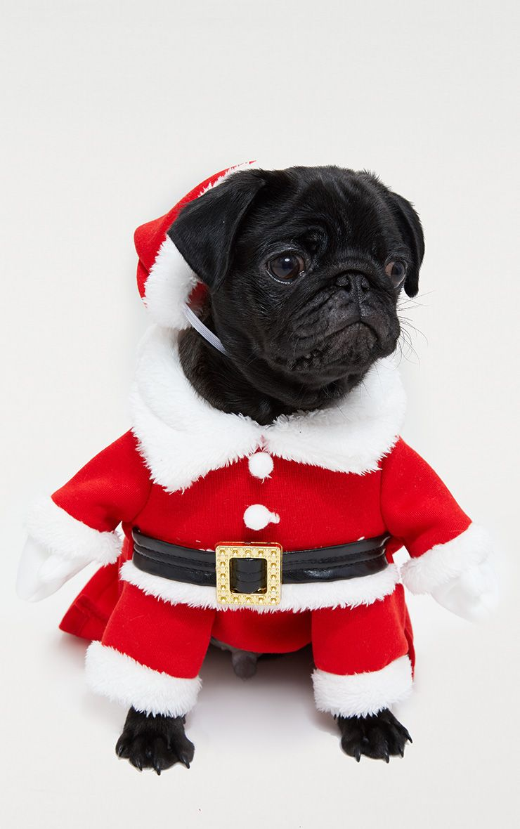 Red Santa Doggy Costume and Hat